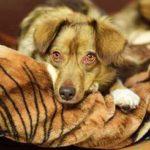 HTV hilft Hunden von obdachlosen Menschen